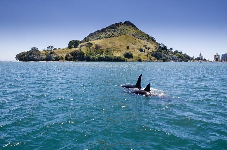 kewpie-harbour-cruises-3-orca-in-harbour-booking-platform-15036378
